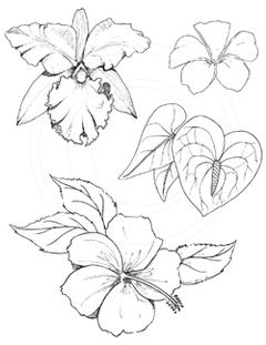 Tropical Flower Drawings Tropical flowers f