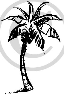 Hawaiian Palm Tree Clip Art Images amp Pictures Becuo