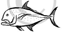 Hawaiian Fish (Ulua) B&W Sketch Clip Art