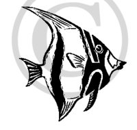 Hawaiian Fish (Kihi Kihi) B&W Cartoon Clip Art