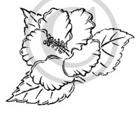 Hawaiian Flower (Hibiscus) B&W Cartoon Clip Art