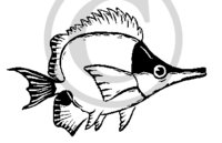Hawaiian Fish B&W Cartoon Clip Art