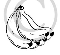 Hawaiian Bananas B&W Cartoon Clip Art