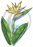 Hawaiian Bird of Paradise Flower Illustration Clip Art