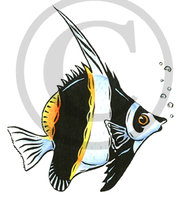 Hawaiian Fish (Kihi Kihi) Illustration 2 Clip Art