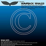 S04 Whale Facts