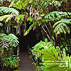 BB06 Thurston Lava Tube Entrance Big Island