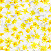C03 Plumeria Lovely Yellow Scatter 8x8 Paper