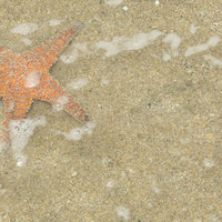 Y11 Starfish on Sand